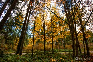 Autumn Forest - 16mm, 1/350 @ f/4