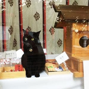 弥生神社 社務猫