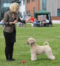 Terrier Group 1 at York  EblanaHalls