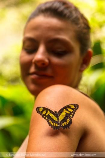 mariposa-costarica