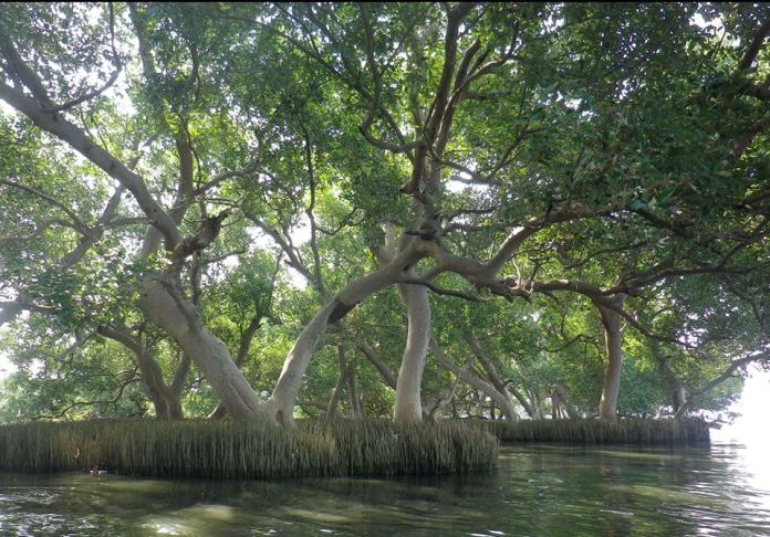 Mangrove Forest Park at Navotas.
