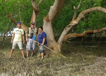 Treading the muddy mangrove forests