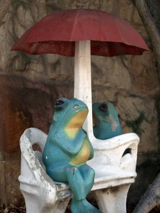 Kirribilli front yard frogs