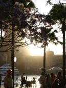 sunset at Circular Quay