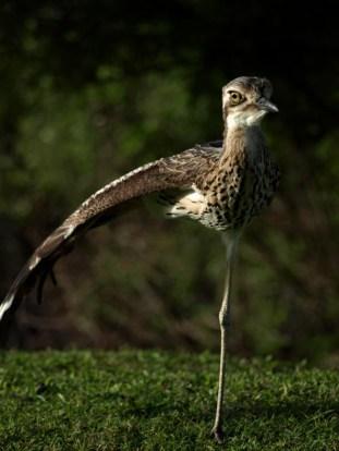 bird having a stretch