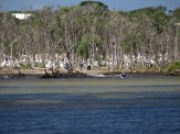 a small section of the pelican colony