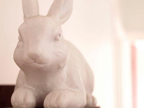 crazy bunny 3