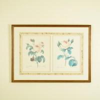 Framed Botanical Art Prints by P.J. Redoute : EBTH