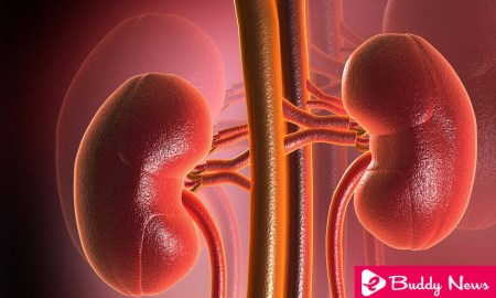 10 Most Common Habits That Damage Kidneys - ebuddynews