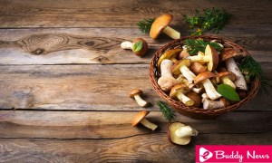 Benefits Of Mushroom Consumption In Your Diet Regularly - ebuddynews