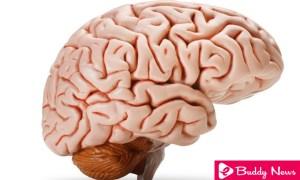 Prevent Dementia By Avoiding These Harmful Habits - ebuddynews