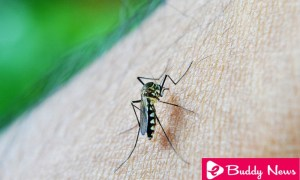 Malaria Symptoms and causes - ebuddy news