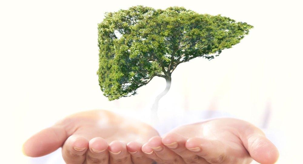 Medlar Leaves for Liver Health - eBuddy News