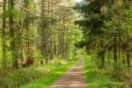 Image: Forest and road