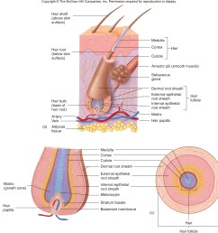 skin system diagram [ 2348 x 2390 Pixel ]