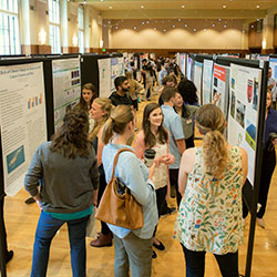Grace Masterjohn presents her work and poster to two people at the Celebrating Undergraduate Excellence events. Lined up behind her, several other students share their work with attendees of the event.