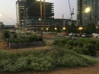 An urban garden sits in the image foreground with plants in raised beds and elsewhere. A parking garage under construction with a crane is in the background. Urban agriculture online.