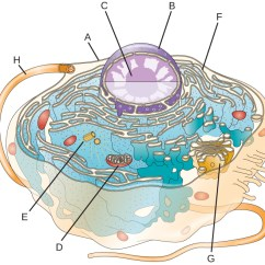 Microbiology Prokaryotic Cell Diagram Labeled Truck Lite 80800 Wiring 3 4 Unique Characteristics Of Eukaryotic Cells Image A The Outside Line Is Long Projection To