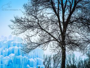 Tree and Ice by Lisa Drew Photos Minneapolis