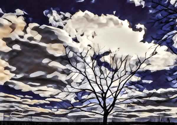 Regal Tree by Lisa Drew Photos