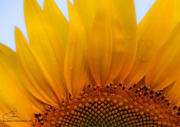 SunPetals-lisadrewphotos