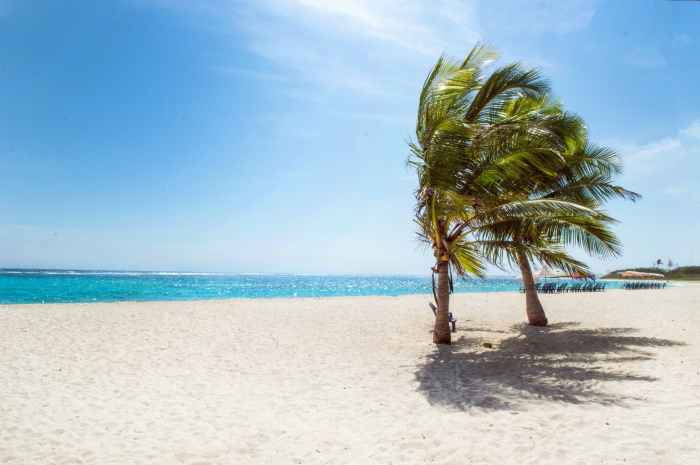 A photo of a a tropical beach with bright blue water and clear skies, two palm trees with their fronds blowing in the tropical breeze.