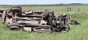 A dead cow laid beside a rollover truck along Highway 872. A young man pulling a stock trailer crashed after he went to turn the dial on the radio, said RCMP.