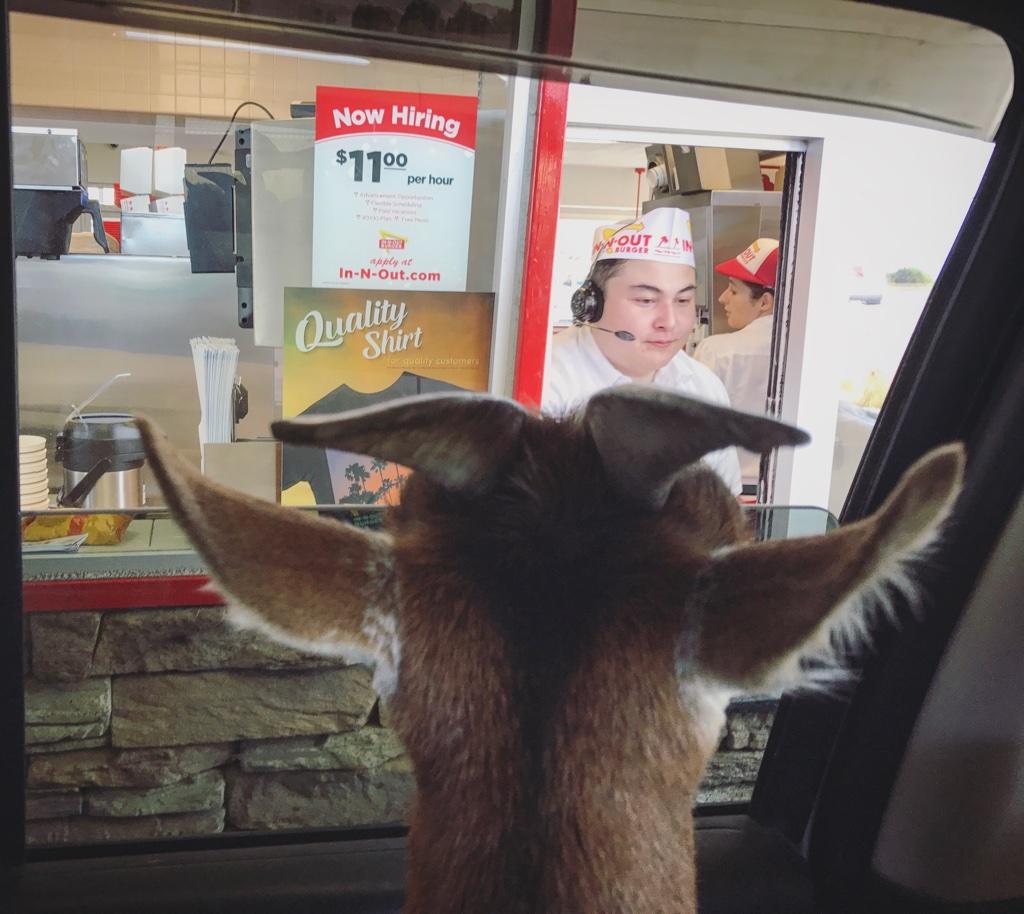 Not Salt Lick City Goat I Said Salt Lake City Argosy Odyssey