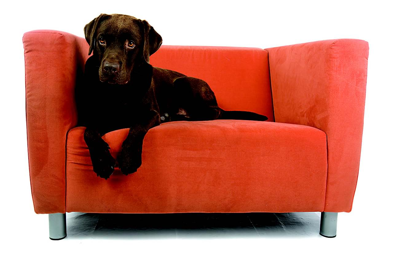 best sofa cleaning service in chennai diy outdoor wood upholstery ecc carpet