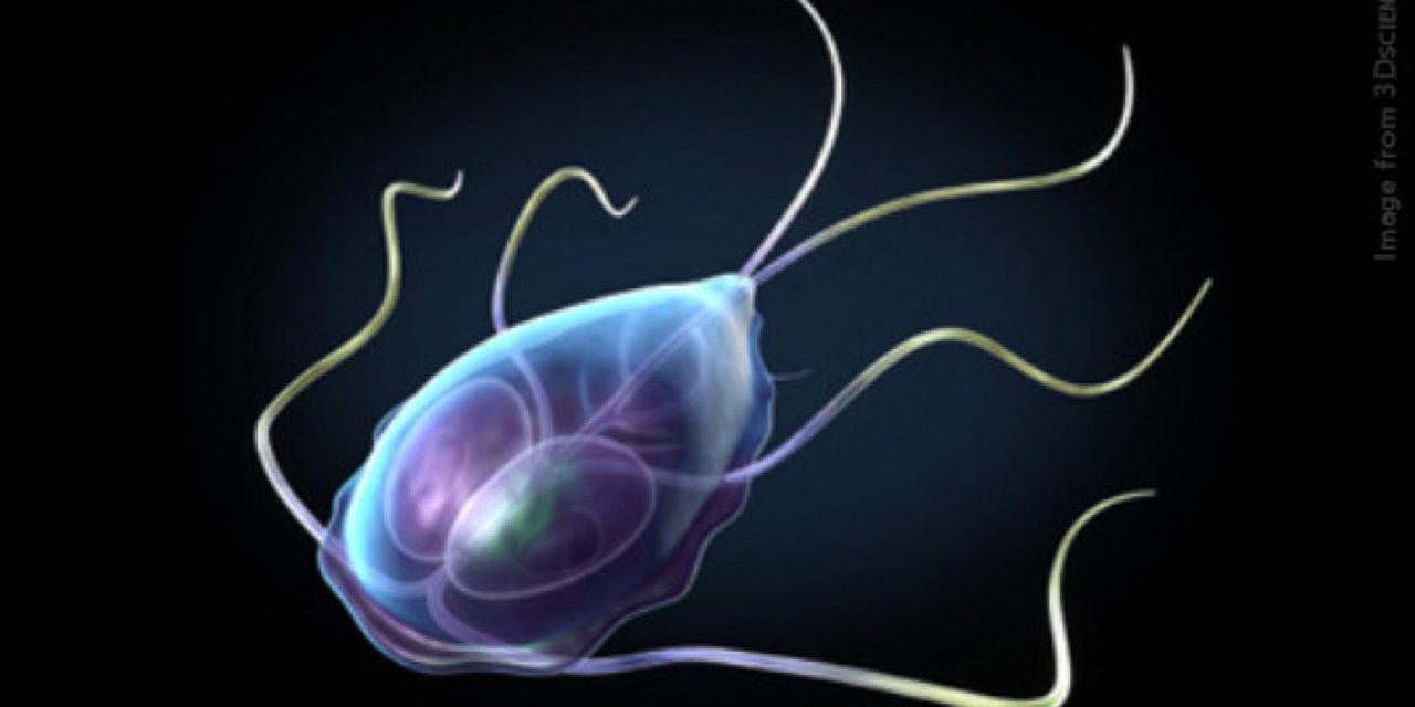 Come liberarsi dai parassiti e iniziare a vivere?