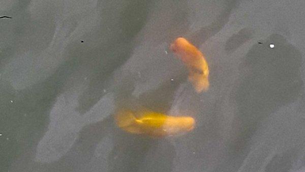 fish - singapore visit