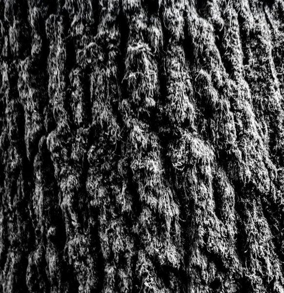 monochrome - how to take photos of trees
