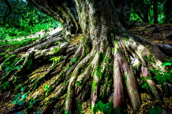 roots - how to take photos of trees