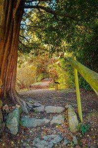 Rhododendron Gardens - surrey hills