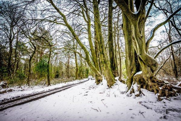 Winter - Surrey Hills