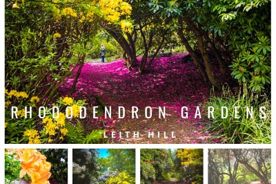 Rhododendron Gardens Leith Hill