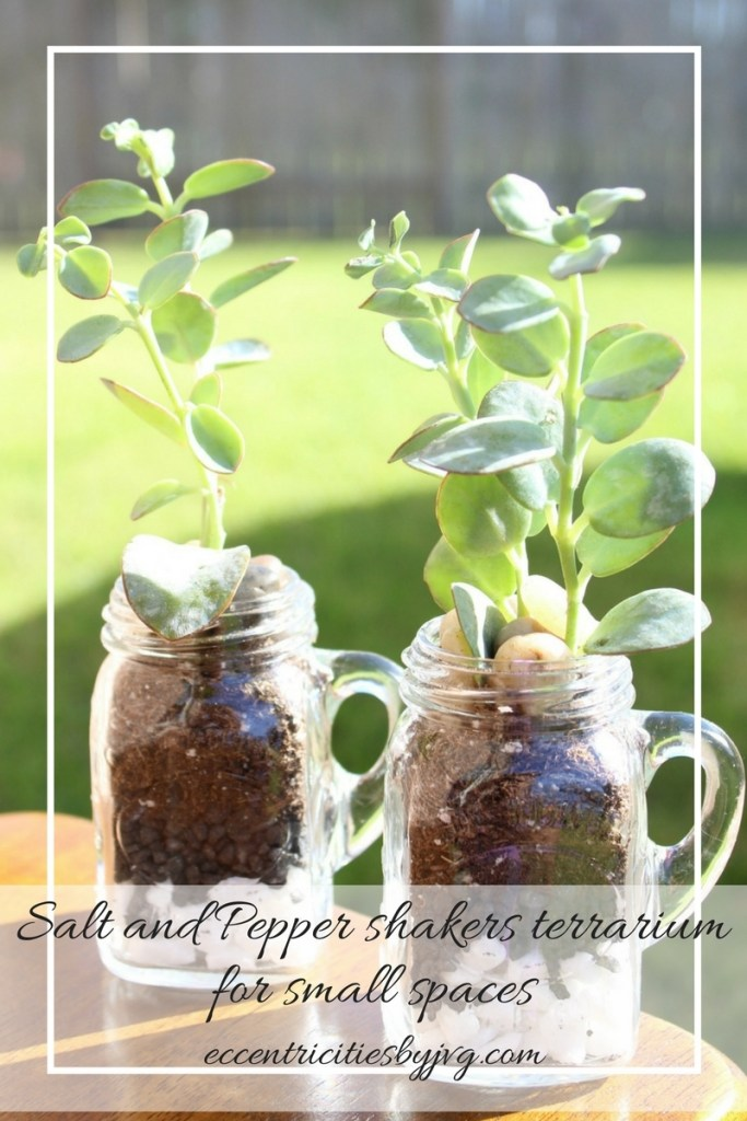 Salt and Pepper shakers terrarium for small spaces. Terrarium with succulent plants.