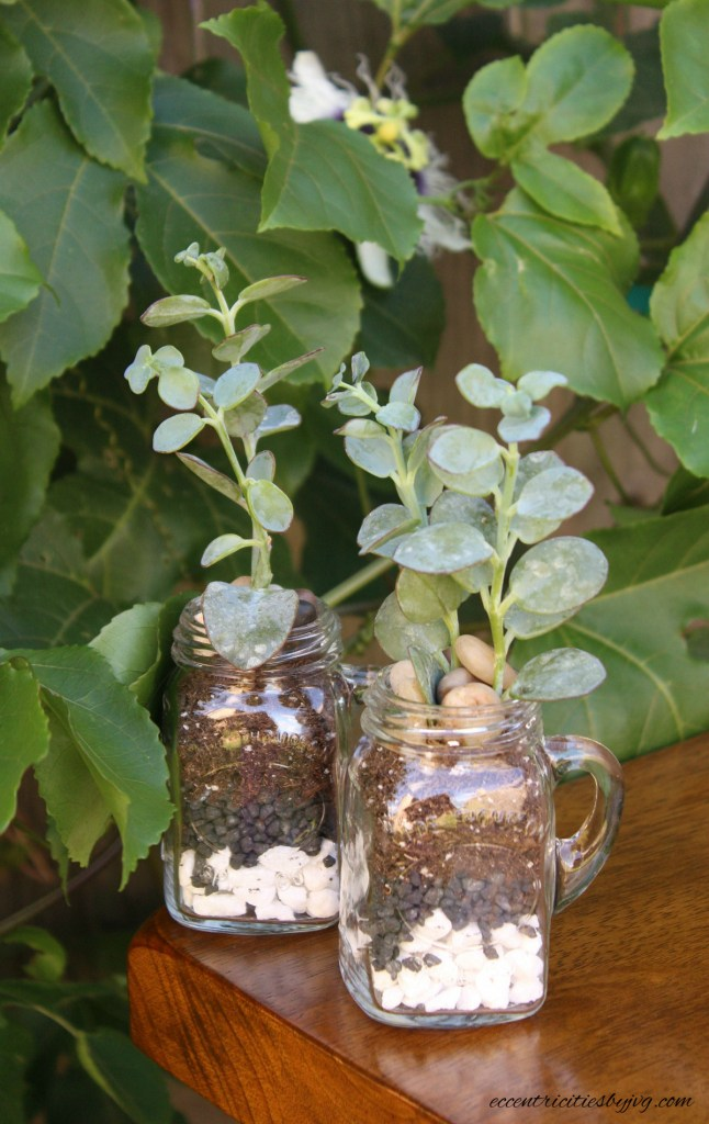 salt and pepper shakers terrarium in front of passion fruit plant. Terrarium for small places