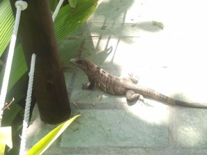 Guardian of the Walkway. WE saw lots of these guys plus their smaller brethren, the lizard and chameleon.