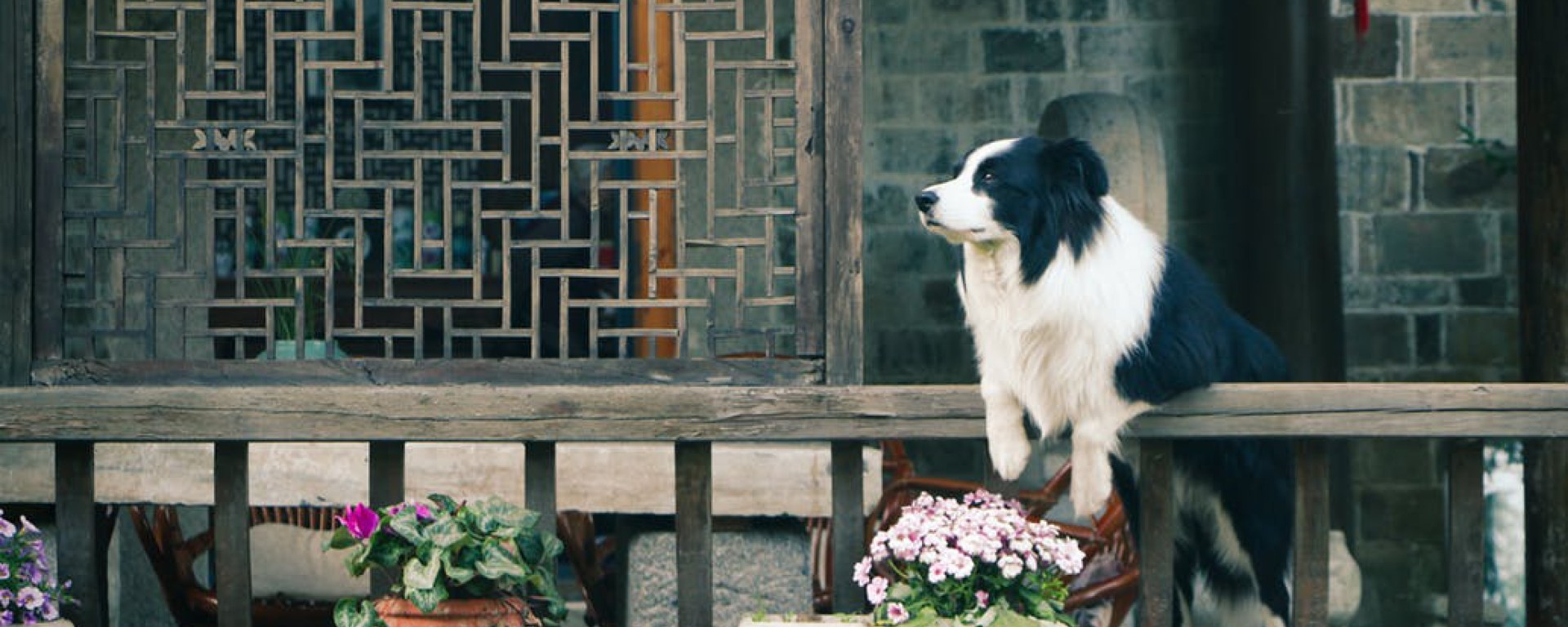 black and white dog on fence
