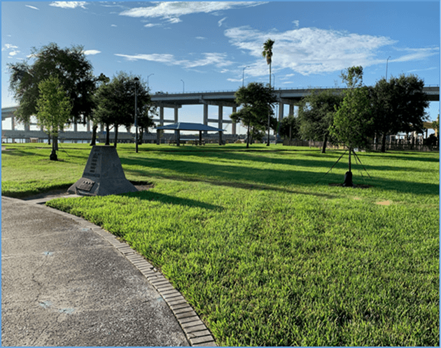 new trees planted in riverside park Nsb