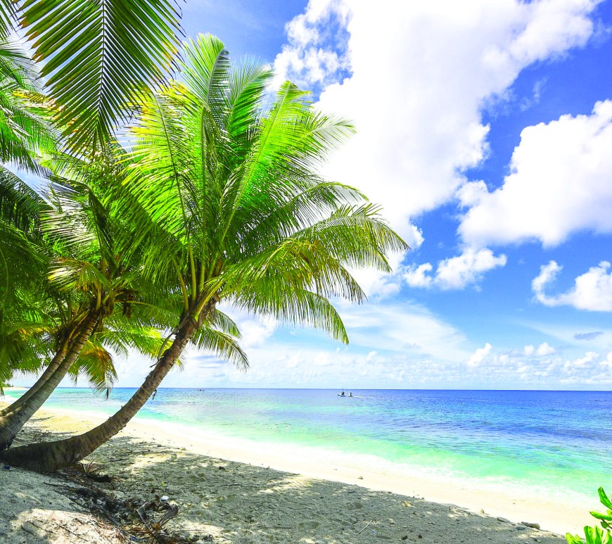 green palm trees on tropical beach