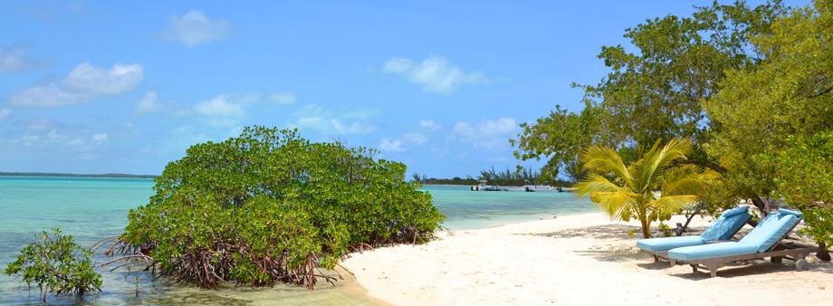 white sand beach with green trees, blue sky and clear water
