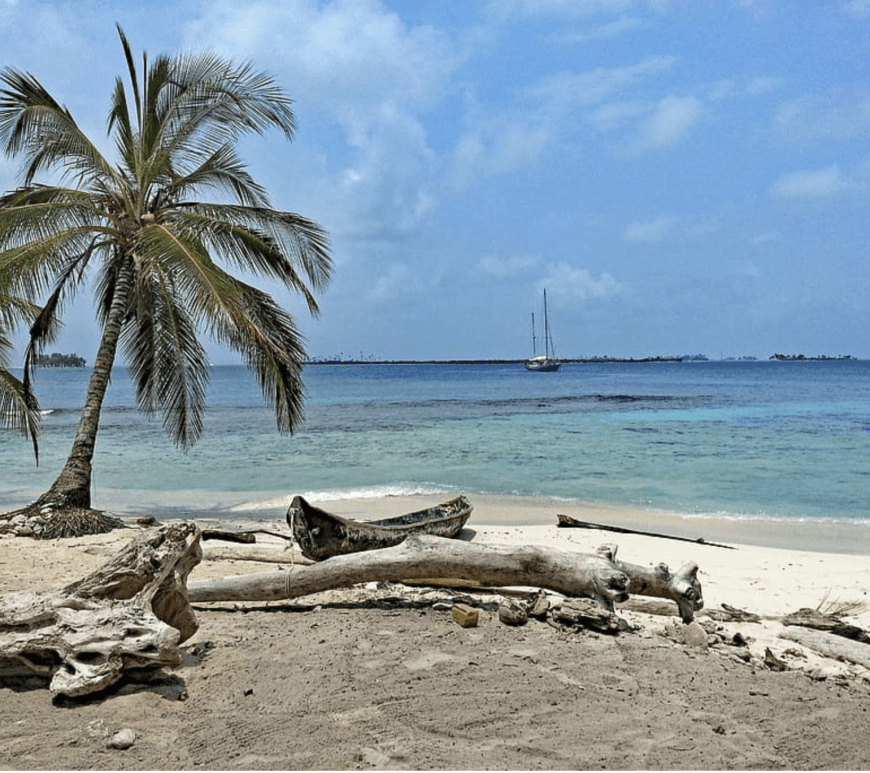 sandy beach with palm tree in front of blue waters with sailboat