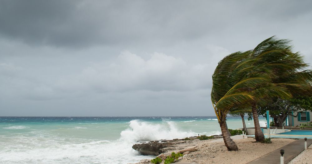 windblown palm trees on a grey and stormy beach