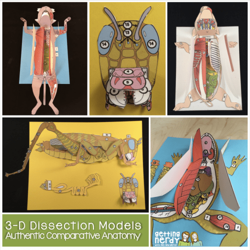 small resolution of Why You Should Be Using 3-D Paper Dissection Models for Life Science and  Biology   The TpT Blog