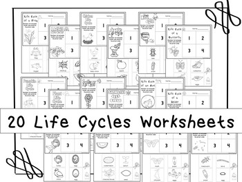 20 Life Cycles Printable Worksheets in a PDF file