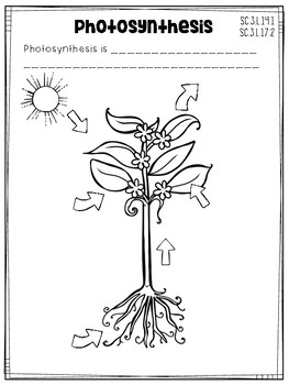 3rd Grade Science Interactive Notebook: Plants by Cori