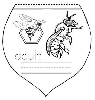 Bee Activities: Life Cycle Of A Honey Bee: