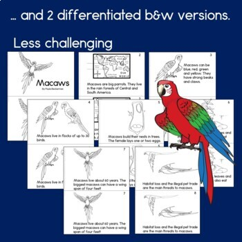 Rainforest Readers Macaws Guided Reading Book by Paula's